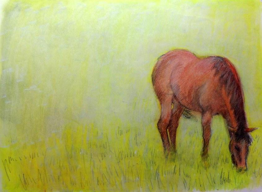 my friend's horse, sarah