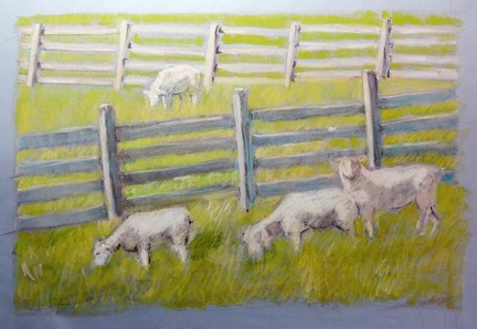 neighbor's sheep