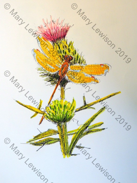 thistle and dragonfly